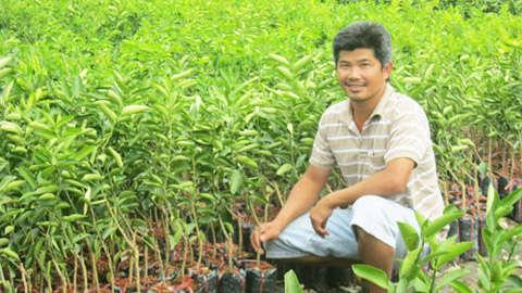 Mỗi năm cơ sở cây giống anh Truyền sản xuất bán ra thị trường khoảng 400 ngàn cây chanh giống.